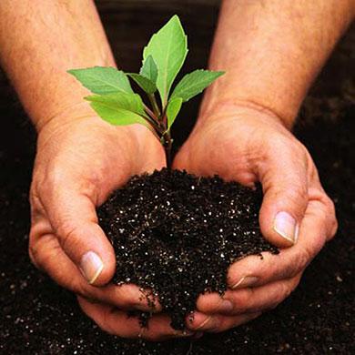 Hand & Soil
